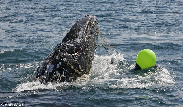 whale-shark-net.jpg
