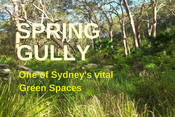 SPRING_GULLY_-.png