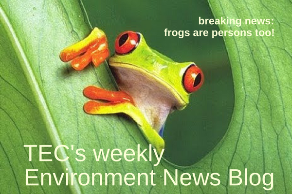 frogs_blog.png