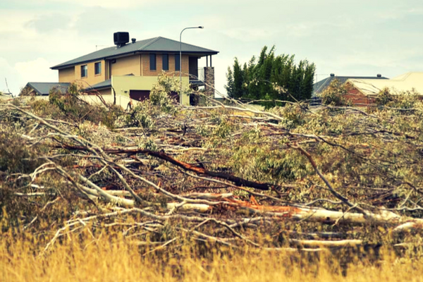 trees_cleared_round_house.png