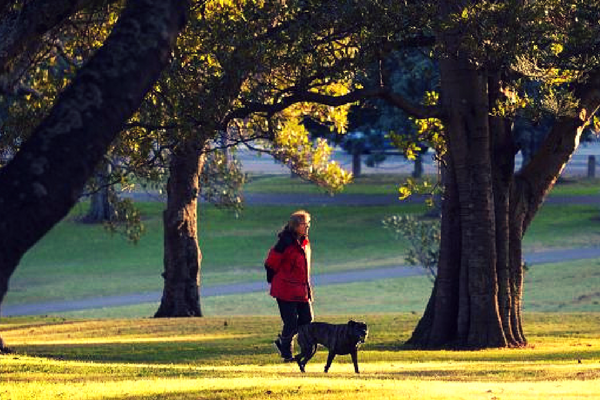 moore_park_dog_walker.png