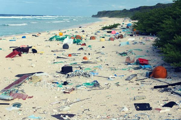 tassie_litter_beach.png