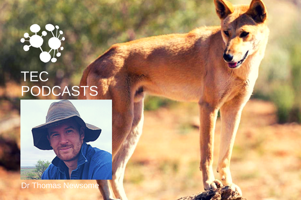 TEC_PODCASTS_dingoes_2.png