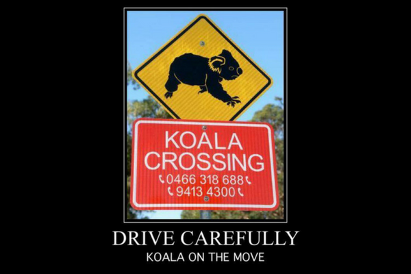 koala_crossing.png