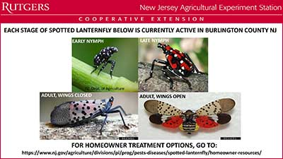 Spotted Lanternfly Update