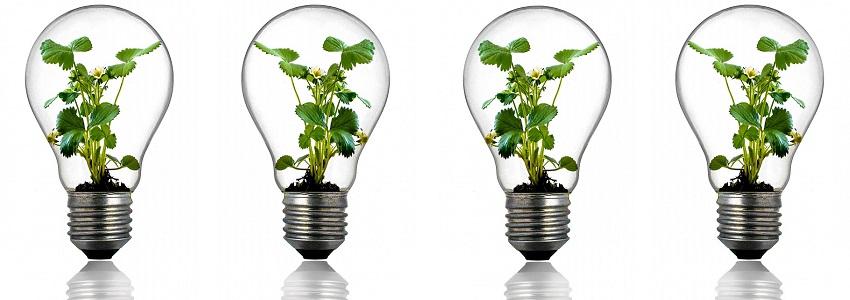 bulb-s.jpg