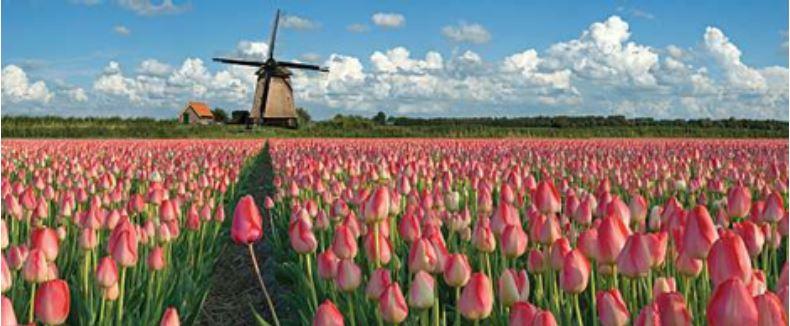 Tulip_Field.JPG