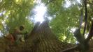 TREES IN TROUBLE Press Still 3