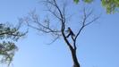 TREES IN TROUBLE Press Still 4