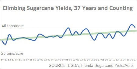 No Bad Years for Sugar: Yields Growing Steadily Since 1980