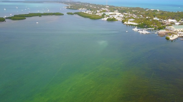 Algae covers Florida Bay behind Worldwide Sportsman in Islamorada
