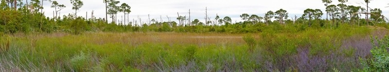 King Ranch and US Sugar want more development--and more pollution--in the St. Lucie watershed