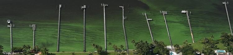 TCPALM_algae_750.jpg