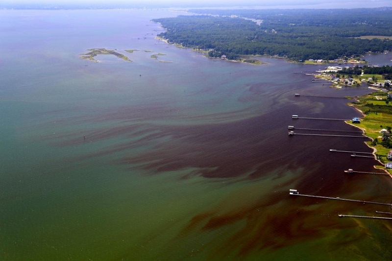 Florida waters are showing signs stress that led to dead zones on the Chesapeake