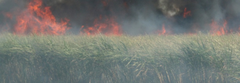 Sugarcane_burning_credit_unknown-2_800-narrow.jpg