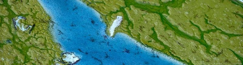 Toxic bloom of cyanobacteria. Photo by John Moran.