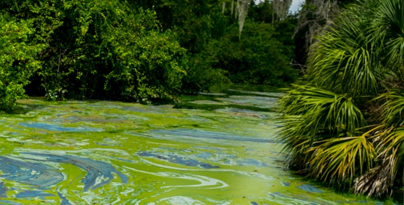 USGS Study: Saltwater triggers cyanobacteria to release toxins