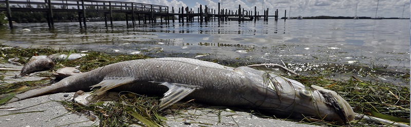 Florida ran out of landfill space for fish killed by toxic blooms in 2018.
