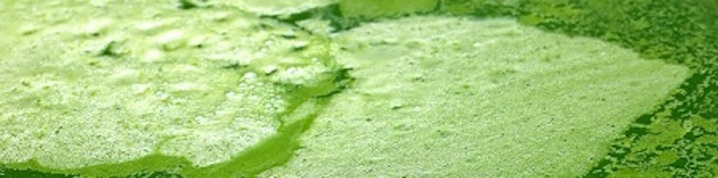 Green-Algae-Water_800.jpg