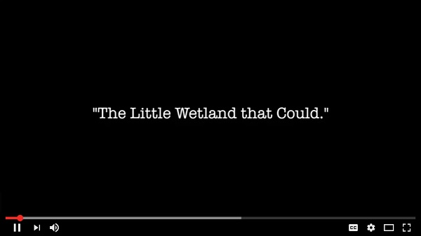 Video: The Little Wetland that Could