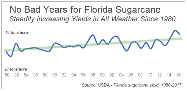 No matter what the weather, sugarcane yields keep going up