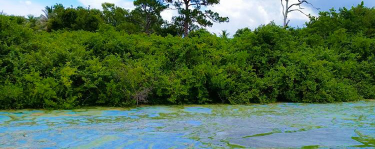 Unwelcome honesty: Independent scientists see flaws in Everglades restoration plans.