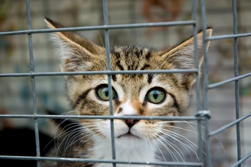 scared_kitten.jpg