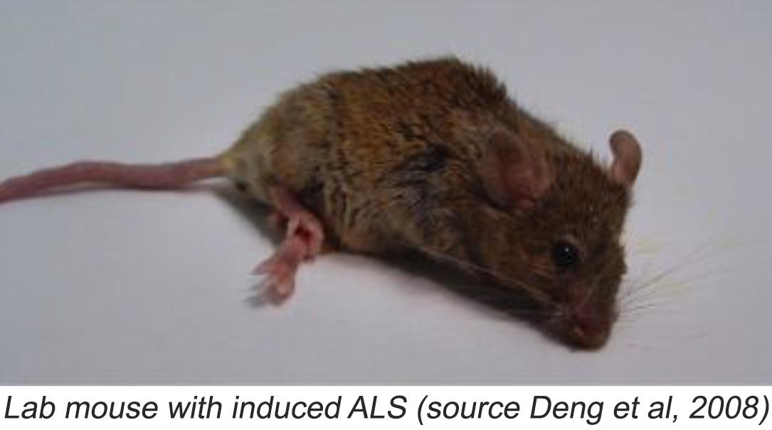 ALS_mouse.png