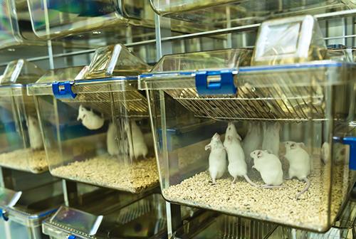 mice cage racks