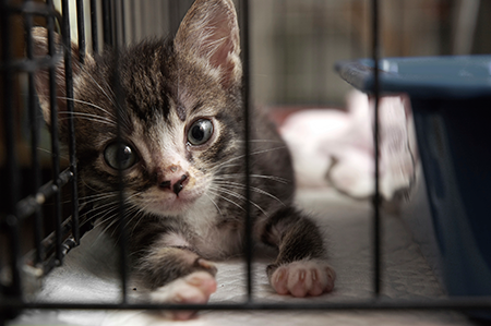 kitten-in-cage-close-up.png