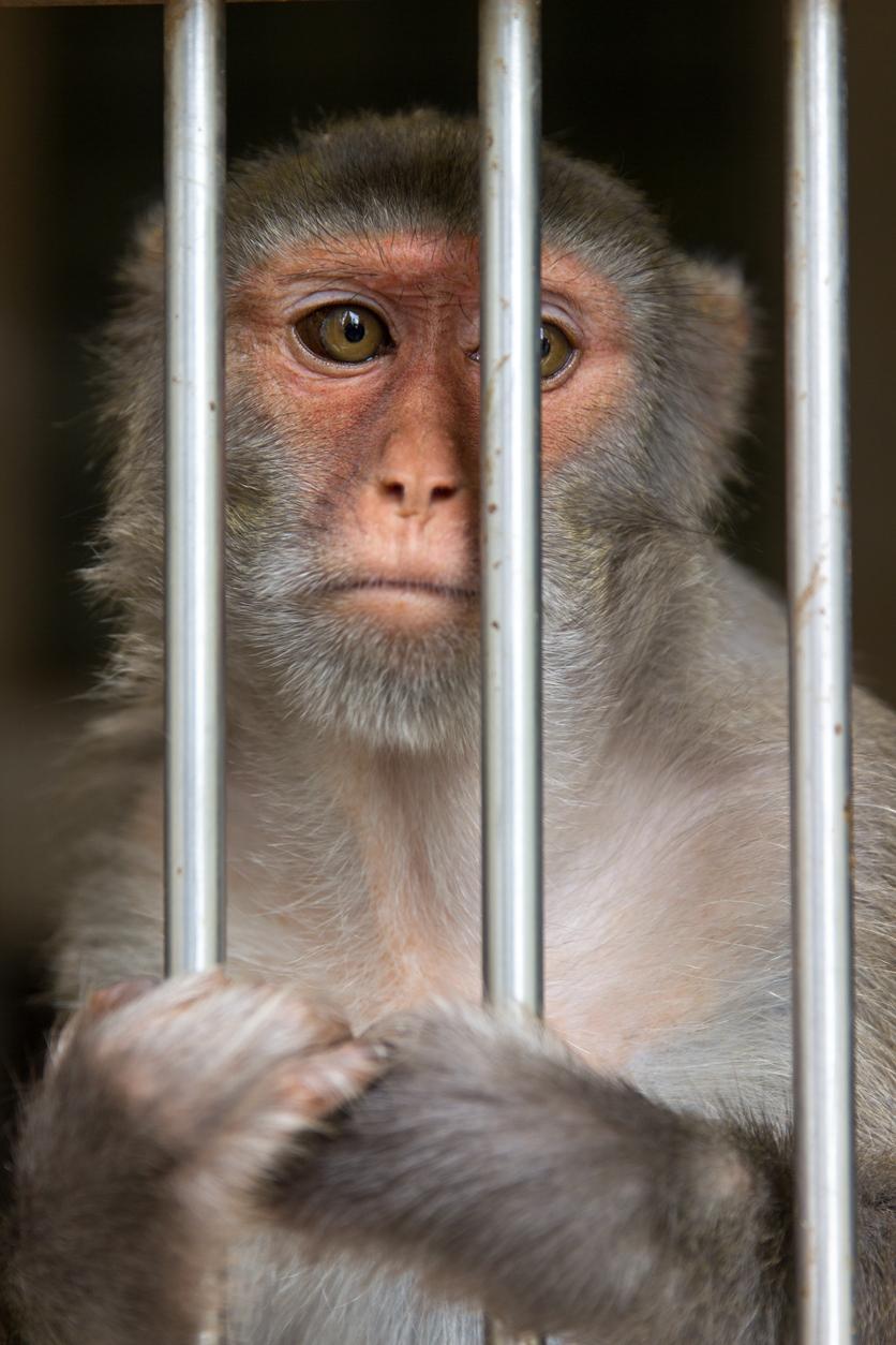 monkey_holding_bars.jpg