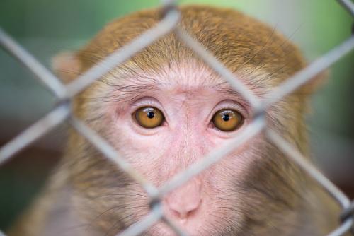 sad_monkey_closeup.jpg