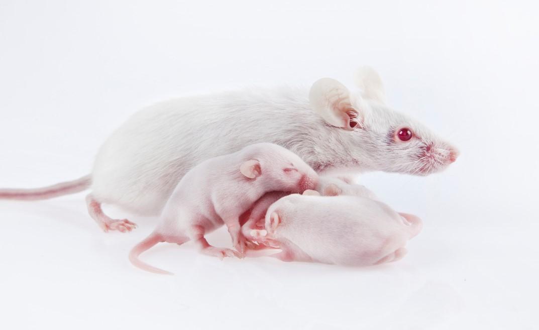 mouse_w_babies_crop.jpg