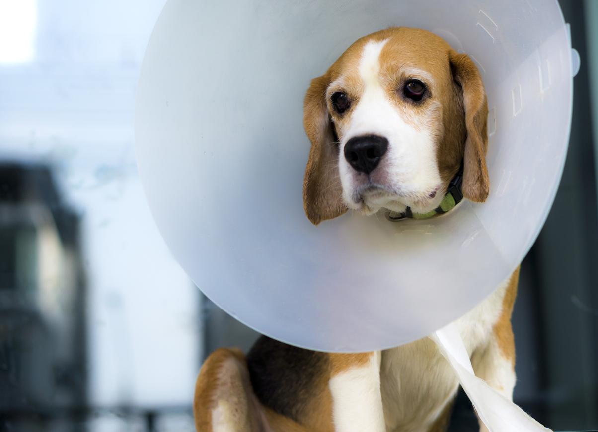 dog_in_collar_2.jpg