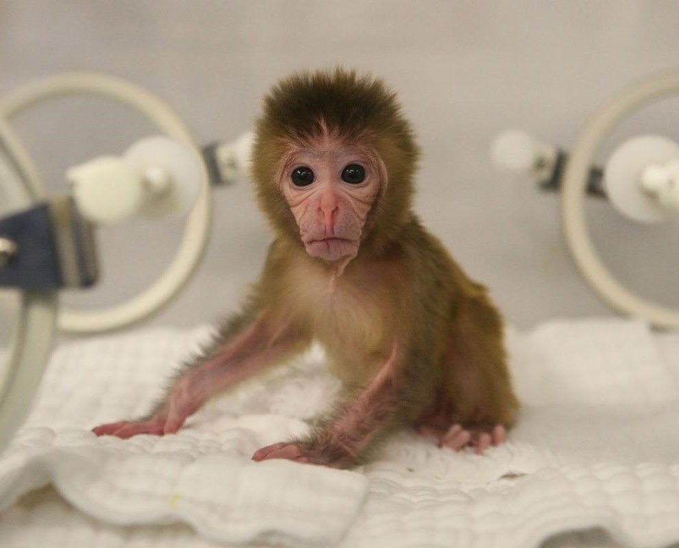 baby_monkey_crop.jpg