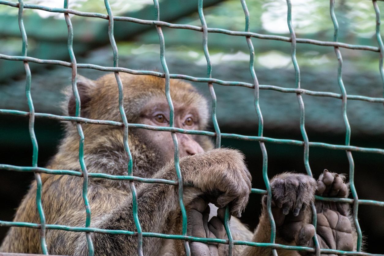 monkey_in_cage.jpg