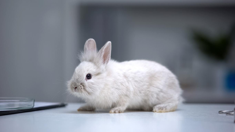 rabbit_on_table.jpg