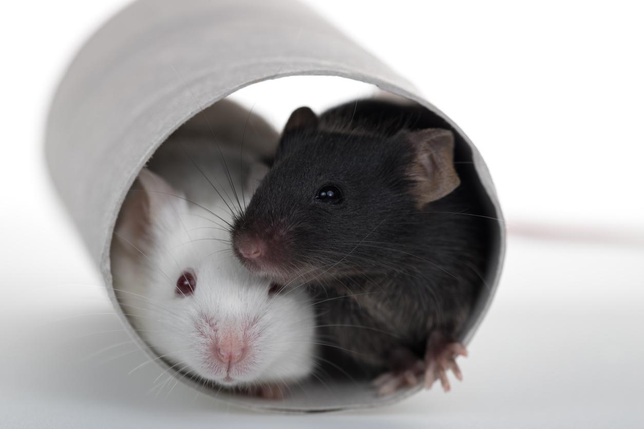 two_mice_in_tube.jpg