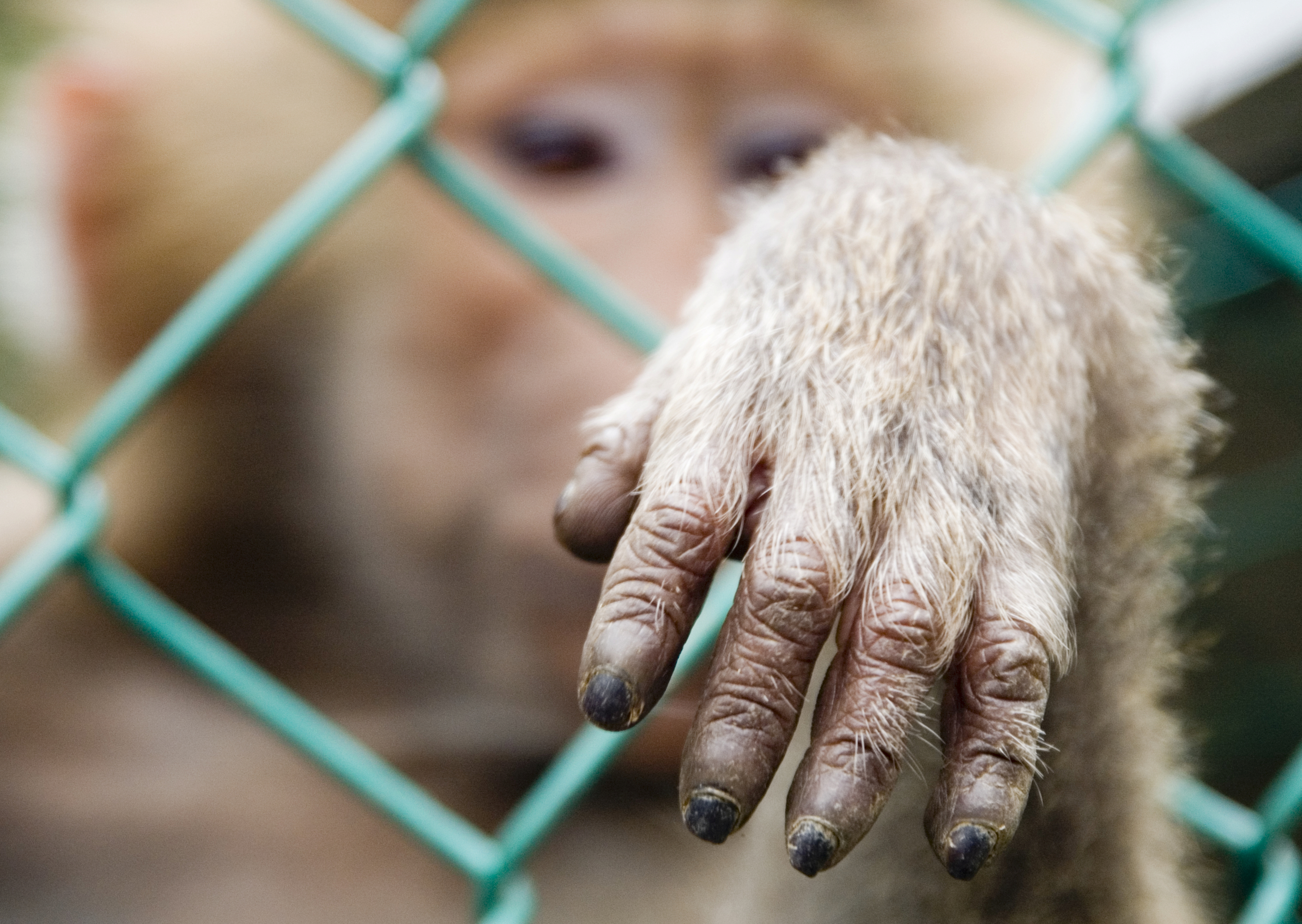 Monkey_hand_thru_bars.jpg