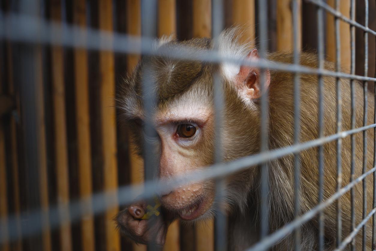 monkey_in_distress.jpg