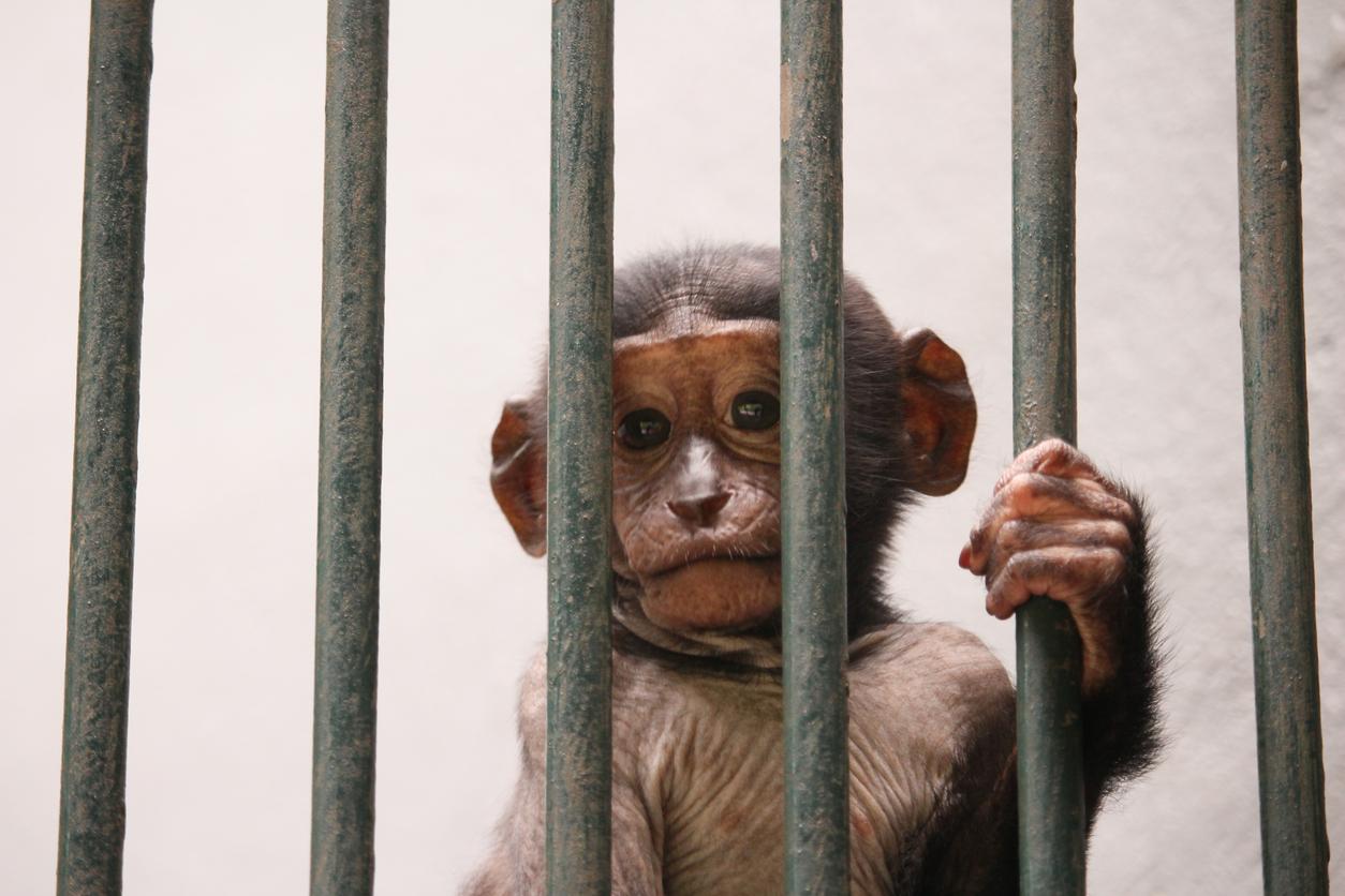 monkey_sad_face.jpg