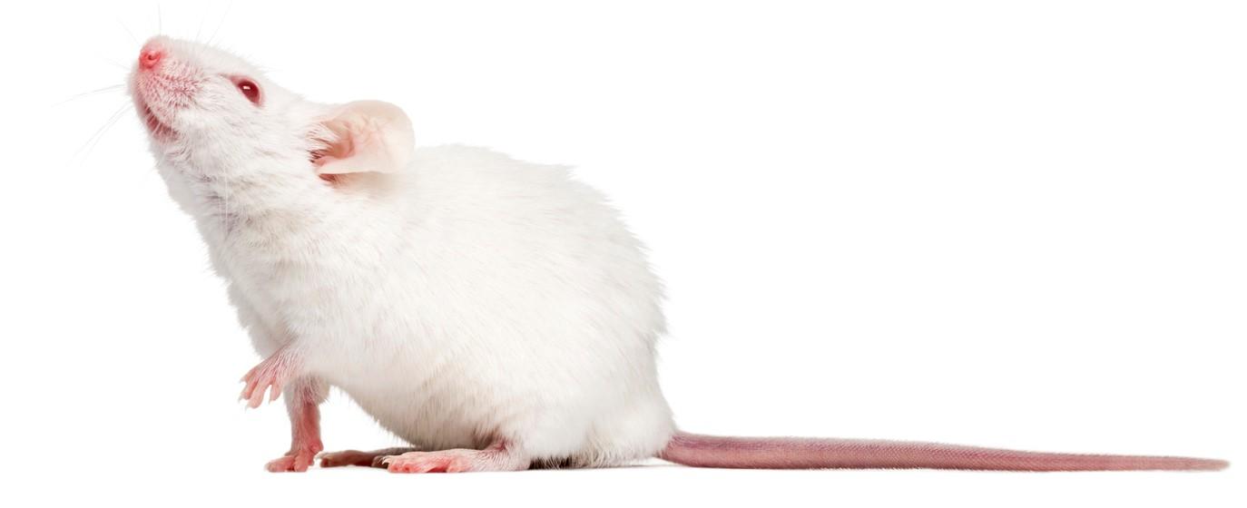 mouse_looking_up_crop.jpg