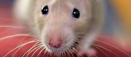 mouse_half_close_up_crop.jpg