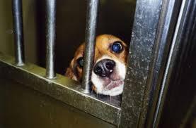 beagle_closeup_cage.jpg