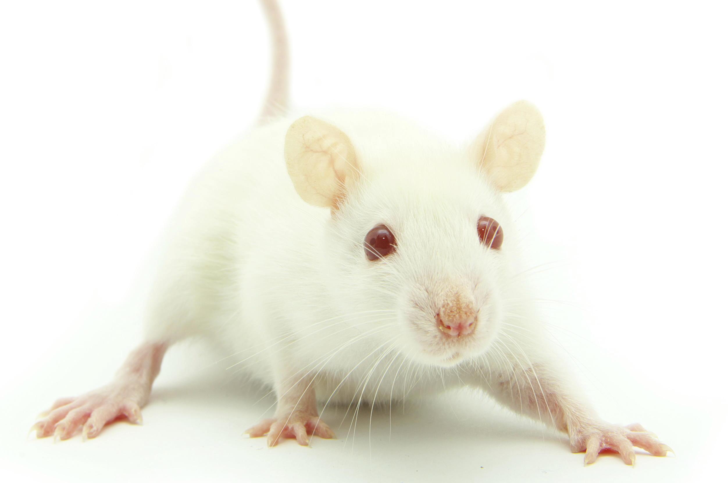 mouse_startled_crop.jpg
