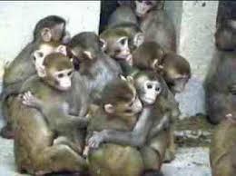 group_of_monkeys.jpg