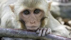monkey_by_twig.jpg
