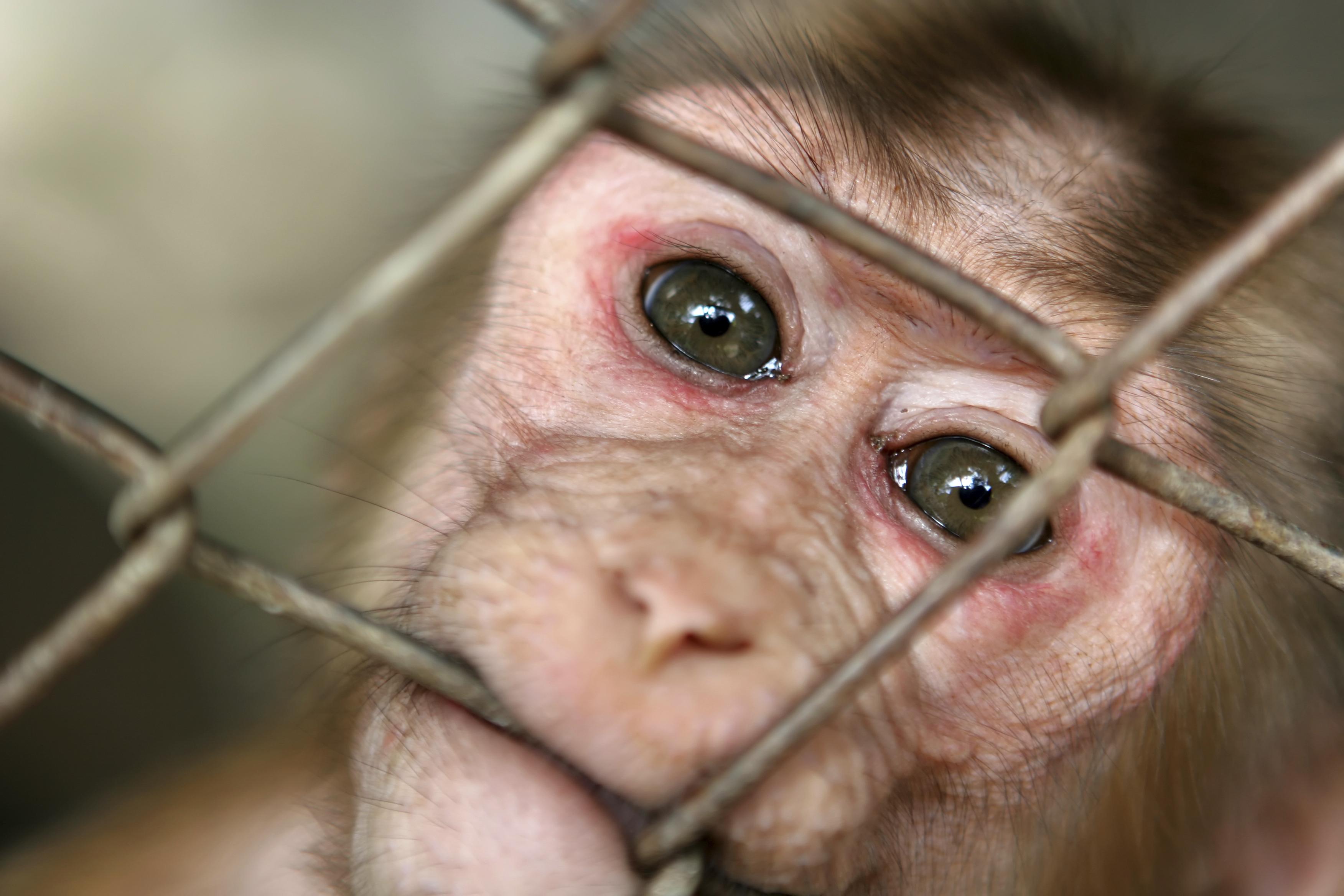 monkey_close_up_biting_bars.jpg