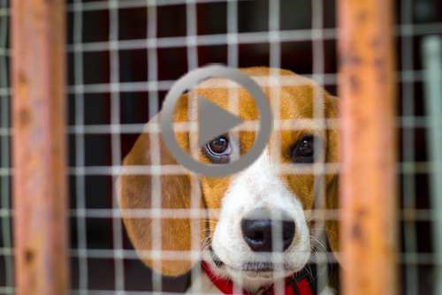 beagle_in_cage_size_small-play.png