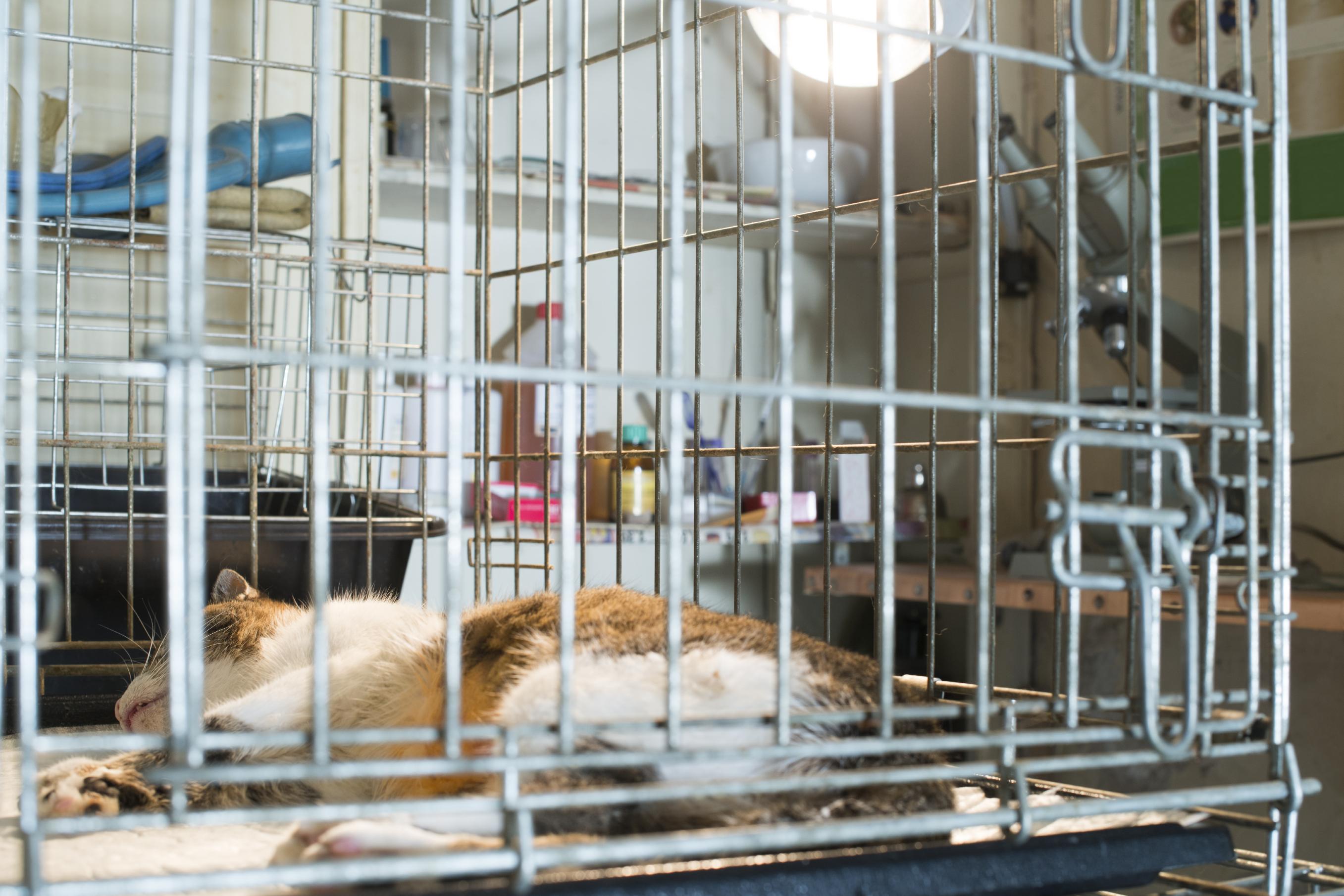 cat_lying_flat_in_cage.jpg